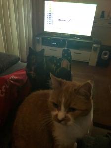 2hft_f1cats